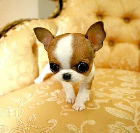 狗狗¤常见皮肤病有哪些