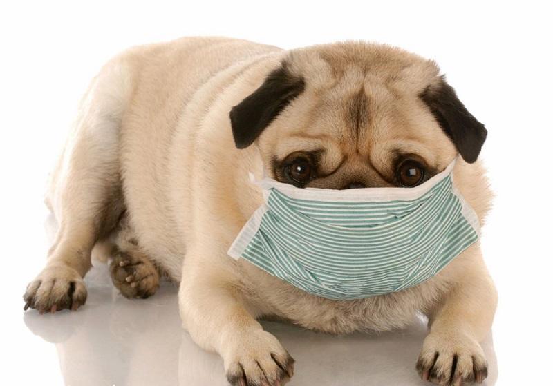 狗狗会感冒吗?狗狗得感冒是什么样子?