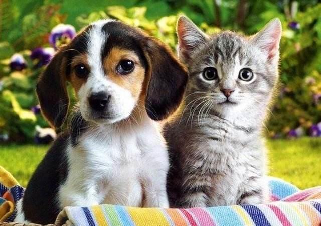 猫咪每天喂几顿,狗狗每天喂几顿